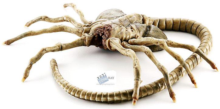 An Alien facehugger prop