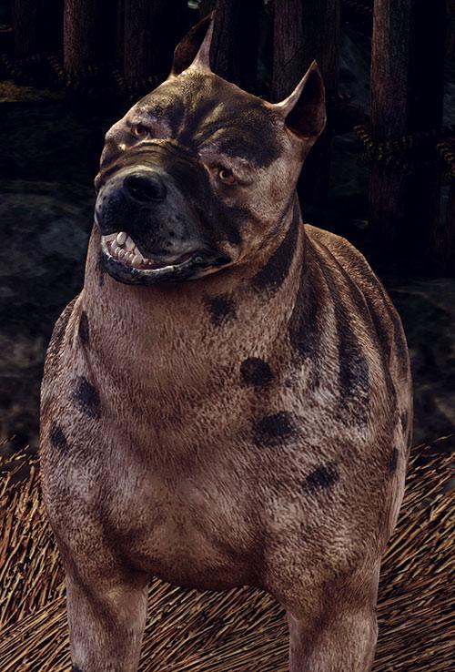 Dog (Dragon Age origins mabari) with kaddis