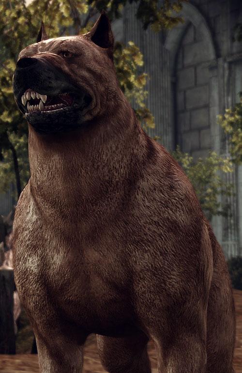 Dog (Dragon Age origins mabari) teeth bared