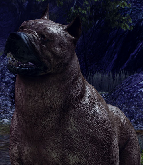 Dog (Dragon Age origins mabari) with head cocked to the side