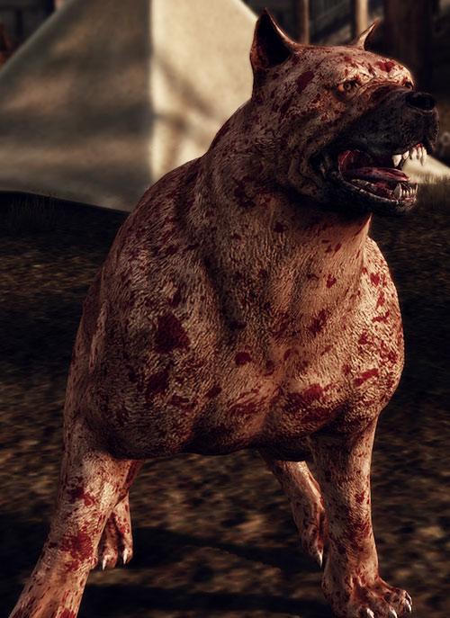Dog (Dragon Age origins mabari) blood-splattered