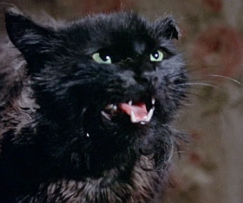 Black cat Cosmic Creepers (Bedknobs and Broomsticks)