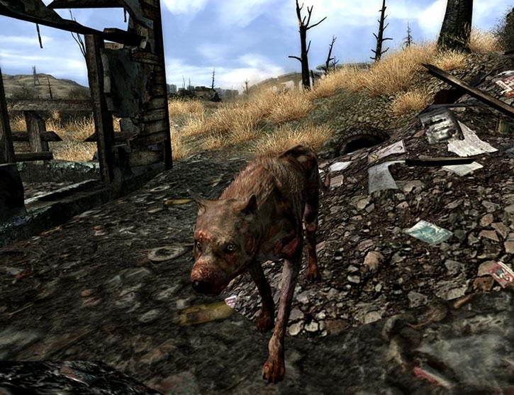 A raider dog near a ruined building
