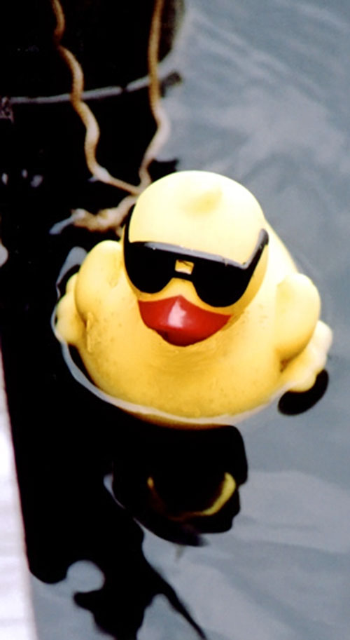 Plastic duck with sunglasses floating on water