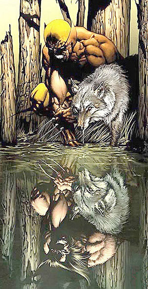 Wolverine (Marvel Comics) and a white wolf in a forest