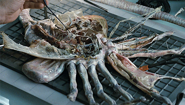 Alien facehugger being dissected