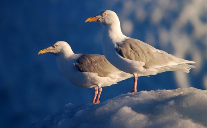 AnimalFile-Bird-h