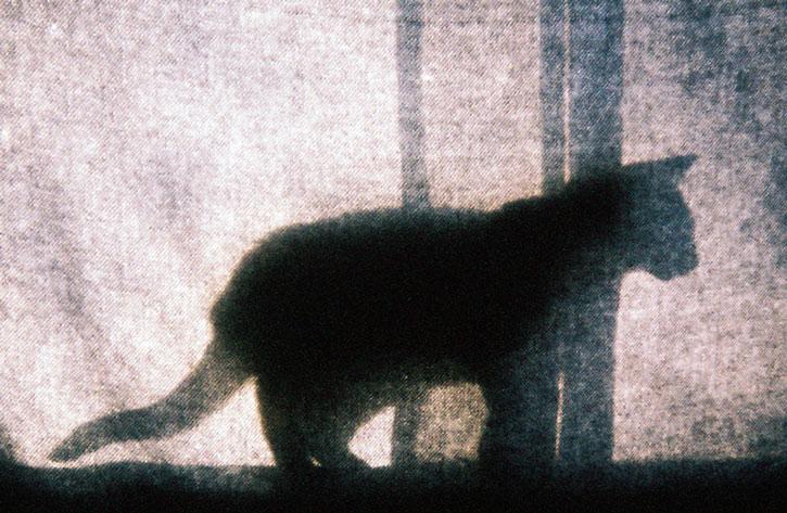 Cat behind a curtain