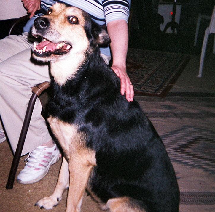 A large dog