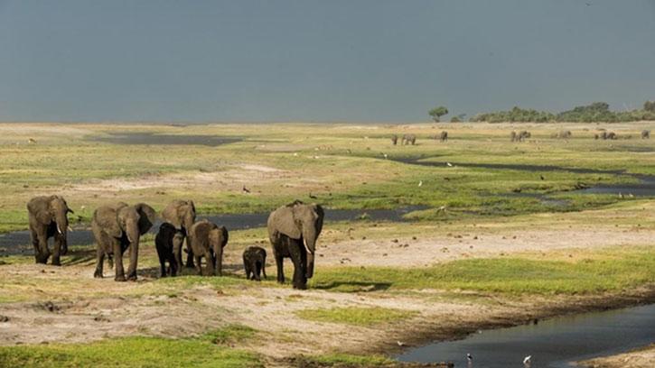 Elephants on a plain