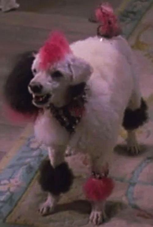 Elvira's punk poodle, Gonk