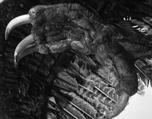 Giant Claw (1957 movie) talon closeup
