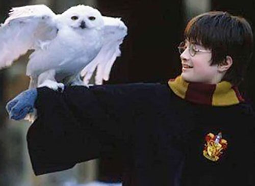 A young Harry Potter with his white owl