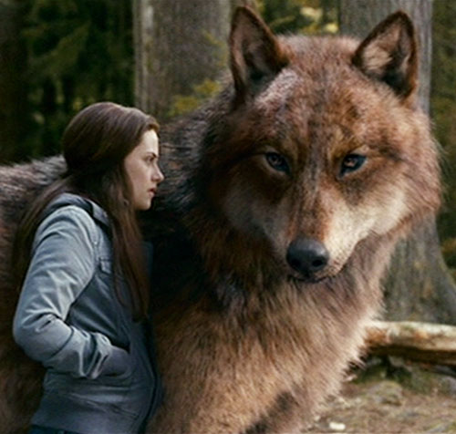Jacob Black - Twilight - Taylor Lautner - Character ... Werewolf Twilight Jacob