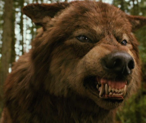 twilight jacob black wolf - photo #8