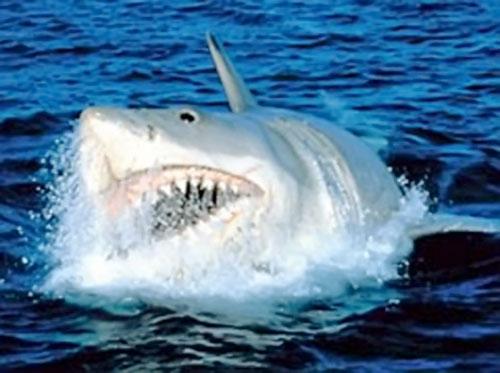 Jaws shark (Spielberg movie) surfacing