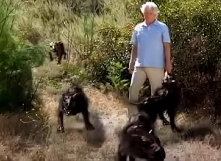 Return of the Killer Shrews (2012 movie monster) run along a trail