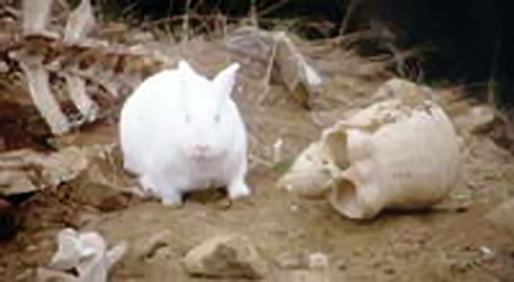 Killer rabbit aka the vorpal bunny among human bones