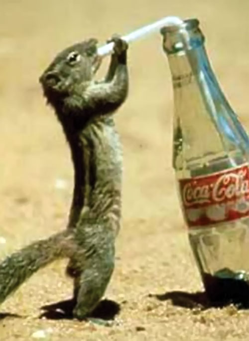 A squirrel uses a straw to drink from a coke bottle