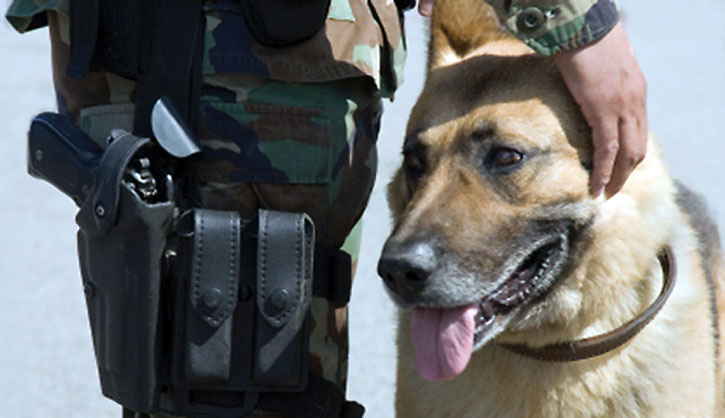 Guard dog with a man in fatigues with a pistol