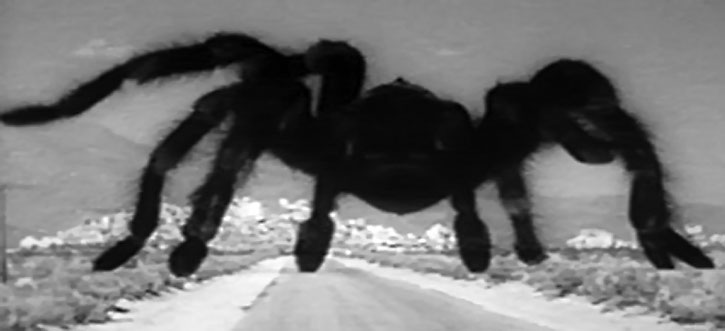 Immense tarantula running in the desert, from the 1955 movie