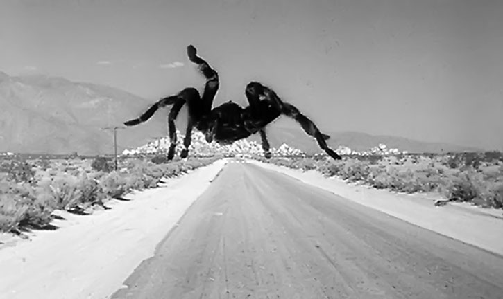 Immense tarantula on a road, from the 1955 movie