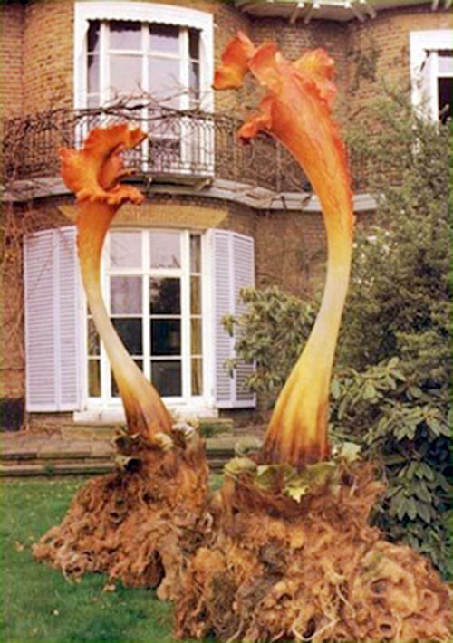 Triffids near a house