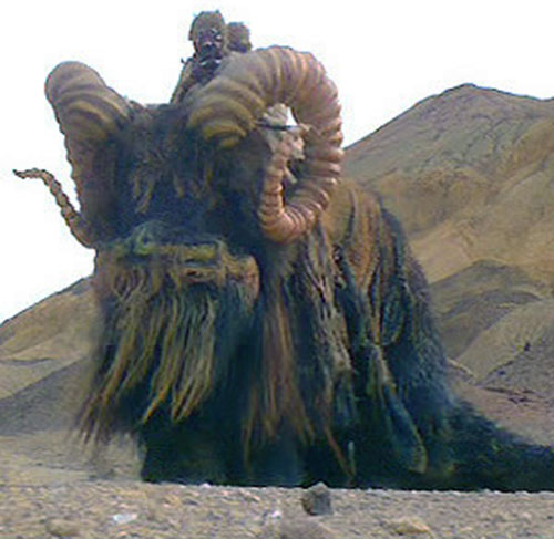 Bantha on Tatooine (Star Wars)