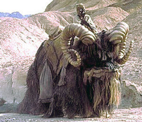 Bantha ridden by a Tusken man (Star Wars)