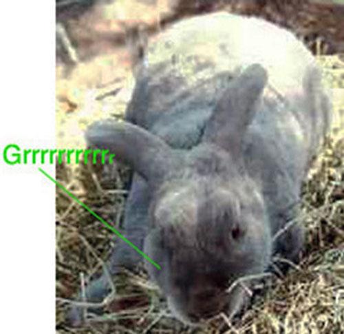 Vorpal Bunny growling menacingly