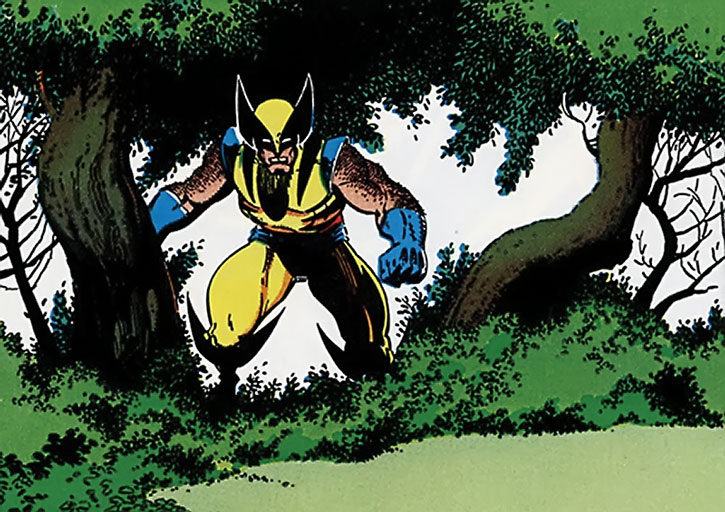 Wolverine in a forest by Art Adams